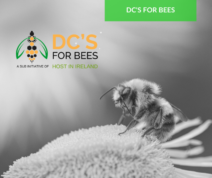 DC for Bees